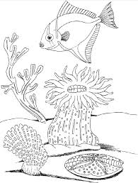 Draw Underwater Coloring Pages 30 For Your Kids Online With