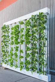 hydrokultur und hydroponik ein leitfaden indoorgarten