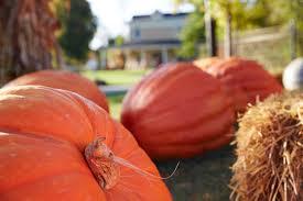 Caledonia Pumpkin Patch by Grand Rapids Halloween Events Activities U0026 Parties