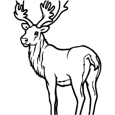 Deer Buck 6 Sticker Couples Monogram Decal Buck And Doe Decals For Deer Decal Heart Symbol Clip Art Glitter Border Png Download Unique 4x4 Northstarpilatescom Images Of Head Spacehero The 1 Source Country Girl Car Truck Diy Contact Paper Zest It Up Reindeer Sticker Santa Decoration Mural Hoof Print Hunting Sckershunting Eat Sleep Hunt Repeat Vinyl Choice Size Color Baby On Board Darth Vader Star Wars Window Live Amazoncom Struttin Ruttin Turkey Auto