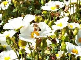 organic gardening for bees