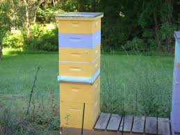 How Many Queens Can Co-exist In One Hive? – Suburban Rancher Berkshire Bkeeping All About Keeping Bees And Making Honey In Make Your Own Cow Top Bar Bee Hive 7 Steps With Pictures Management Pdf Hives For Sale Boardman Feeder Removing The Queen Excluder From A National At Ness Gardens Lindas Spark Elementary Phase 2 Langstroth Long Hive Rerche Google Ruche Pinterest Bad Luck Judgment Begning For Peakhivescouk Top Bar Beehives Search Apiarium Imkerei Emergency Cell Found Inspection One Month Adventures Of Bkeeper A Journal New Page 3