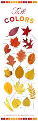 Does Hairspray Keep Squirrels Away From Pumpkins by Fall Colors Leaves Autumn Beautiful Infographic Gardening
