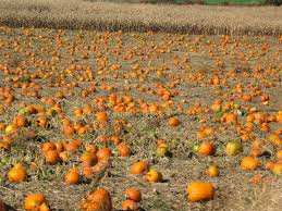 Pumpkin Patch Picking Lancaster Pa by Strasburg Railroad Scenic Train Rides In Pa Dutch Country
