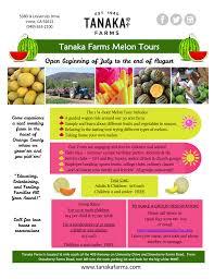 Irvine Pumpkin Patch Hours by Melon U2014 Tanaka Farms
