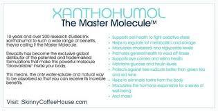 XanthoMax A Xanthohumol Antioxidant