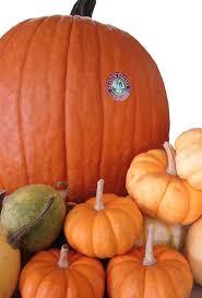 Oak Glen Pumpkin Patch Yucaipa by 100 Oak Glen Pumpkin Patch Yucaipa Best Places To Go Apple