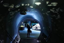 360 tunnel picture of aquarium la rochelle la rochelle
