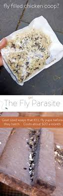 Fly Parasites. Using Parasitic Wasps To Get Rid Of Flies. | Fly ... 25 Unique Flies Outside Ideas On Pinterest Sliding Doors How To Prevent Mosquitoes In Your Back Yard Infographic Images On New Do You Get Rid Of The Backyard Architecturenice Outdoor Goods Mix These 2 Ingredients And House Will Be Free Of Flies Organically Why Are Dangerous To Of Them Brody Pintology Pine Sol As Fly Repellant And Picture Fascating In The Naturally With 5 Simple Steps