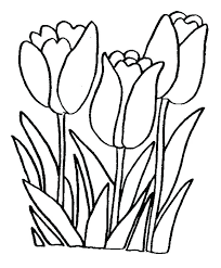 Tulip Coloring Pages Simple Drawings Of Girls Drawing Peony