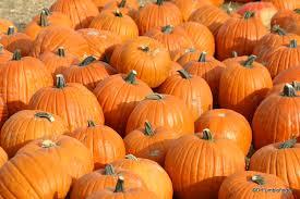 Greenbluff Pumpkin Patch Spokane Wa Hours washington drfumblefinger u0027s adventures of a lifetime