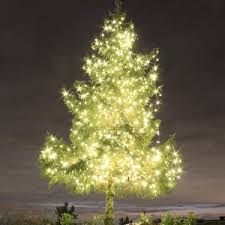 Twinkling Christmas Tree Lights Canada by News Dekra Lite Commercial Christmas Lights And Displays Lit