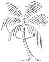 When I see a palm tree I think of vacations beaches and relaxing Do you want to learn how to draw Palm Trees They are probably the easiest type of tree
