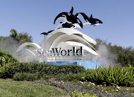 Labor Day Weekend Brings Ticket Deals For SeaWorld, Concerts ... Best Pizza Coupons June 2019 Amazon Discount Code July Tips For Visiting Seaworld San Diego For Family Trips While Going To The Orlando Have Avis Promo Upgrade Azopt Card Mushybooks Payback Coupon Book App Online Codes Bath And Body Works Belk Seaworld Gold Coast Adventure Island Deals Can I Reuse K Cups Pelotoncycles Promo Codes 122