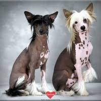 Terriers That Dont Shed by Dogs That Don U0027t Shed Useful Information On Clanimal Clanimal