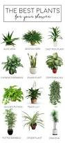 Best Plant For Your Bathroom by Best 25 Plants In Bathroom Ideas On Pinterest Bathroom Plants