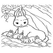 Mama Rabbit With Her Babies Coloring Pages