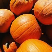 Pumpkin Patch Parker County Texas by Parker Tree Farm Pine Lane Nursery Centennial Container