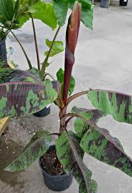 Tropical Paradise Plants for Backyard