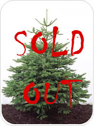 5ft Christmas Tree by Nordmann Fir 4 5ft Christmas Tree Our Real Christmas Trees