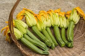 cuisiner fleur de courgette recette des beignets de fleurs de courgette