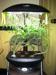 second plant yur fiahed indoor gardening my aerogarden and