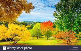 100 For Sale Adelaide Hills Colourful Autumn In Mount Lofty South