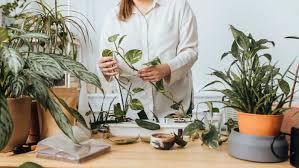 nachhaltige zimmerpflanzen so kommt ihr an faire günstige