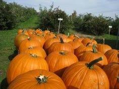 Pumpkin Patch Tampa 2014 by Fall Maze At Sweetfields Farm Brooksville Fl Kids Events
