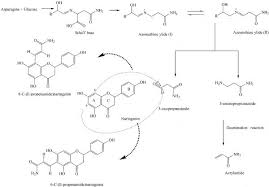 Fig2 The Postulated Pathway For Acrylamide Formation Via Maillard Reaction And Probable Inhibitory Mechanism Of Polyphenols Against