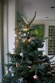 Christmas Tree Species Nz by Interior Design Flour Hand