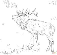 Click The Tule Elk Coloring Pages To View Printable