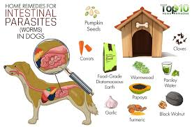 Pumpkin For Pets Diarrhea by Home Remedies For Intestinal Parasites Worms In Dogs Top 10