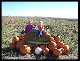 Denver Area Pumpkin Patches by Five Colorado Pumpkin Patches Ripe For The Picking Westword