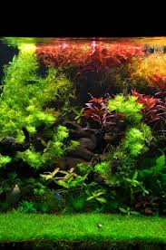 149 Best Aquascape Images On Pinterest | Aquarium Ideas, Aquarium ... King5com Fding Zen Through Aquascapes The Worlds Newest Photos By Pacific Aquascape Flickr Hive Mind Pacific Aquascape 28 Images Westin Photo Courtesy Of Christian Another Beautiful Pool Aquascapes For Luxury Living In Swimming Pool Contractors In Oahu Hi Aquascapes Ada Aquascaping Contest Homedesignpicturewin Submerged Jungle Fekete Tamas Awards Jungle 241 Best Aquatic Garden On Pinterest Aquascaping 111 Amazing Aquariums And The666 Extreme18
