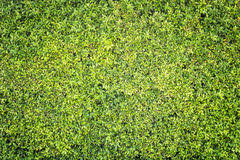 Pattern Green Plant Wall Texture And Background Royalty Free Stock Images