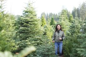 Silver Tip Christmas Tree Los Angeles by Where To Get The Best Christmas Trees In Los Angeles Cbs Los Angeles