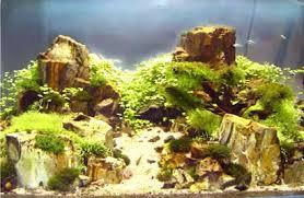 aquarium d eau douce aquarium eau douce les plantes faciles pour debuter entretien