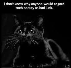 cat quotes best 25 black cat quotes ideas on happy