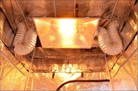 1000 Watt Hps Lamp by Hydroponic Indoor Grow Tent