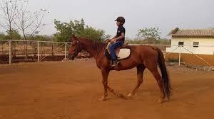 100 Farm House Tack 1873 Equestrian Lifestyle Resort Karjat Raigad