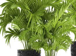 die 10 besten pflanzen für drinnen plantura