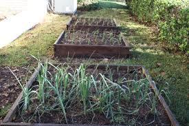 Fall Ve able Garden