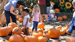 Pumpkin Patch With Petting Zoo Las Vegas by Fun U0027s All Round At Fall Faire And Pumpkin Patch Daily Pilot