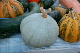 Types Of Pumpkins For Baking by 15 Winter Squash And Pumpkins Varieties