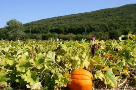 Pumpkin Picking Nj by Don U0027t Miss These 12 Great Pumpkin Patches In New Jersey This Fall