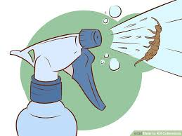 Kill Springtails In Bathroom by How To Kill Collembola 10 Steps With Pictures Wikihow