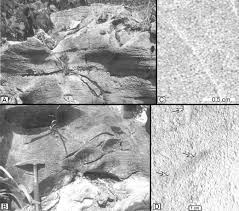 Trough Cross Bedding by Lower Triassic Oolites Of The Nanpanjiang Basin South China
