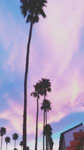 Palm Trees Iphone Wallpapers