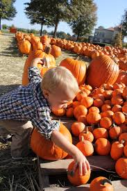 Patterson Farm Pumpkin Patch Ohio by Lazy 5 Ranch Sweet Bakes And Baby Cakes